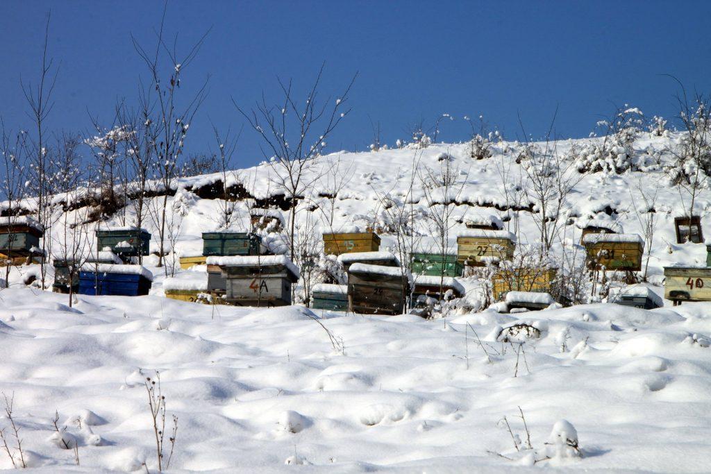 Machen Bienen Eigentlich Winterschlaf Hobee De Der Hochstetter