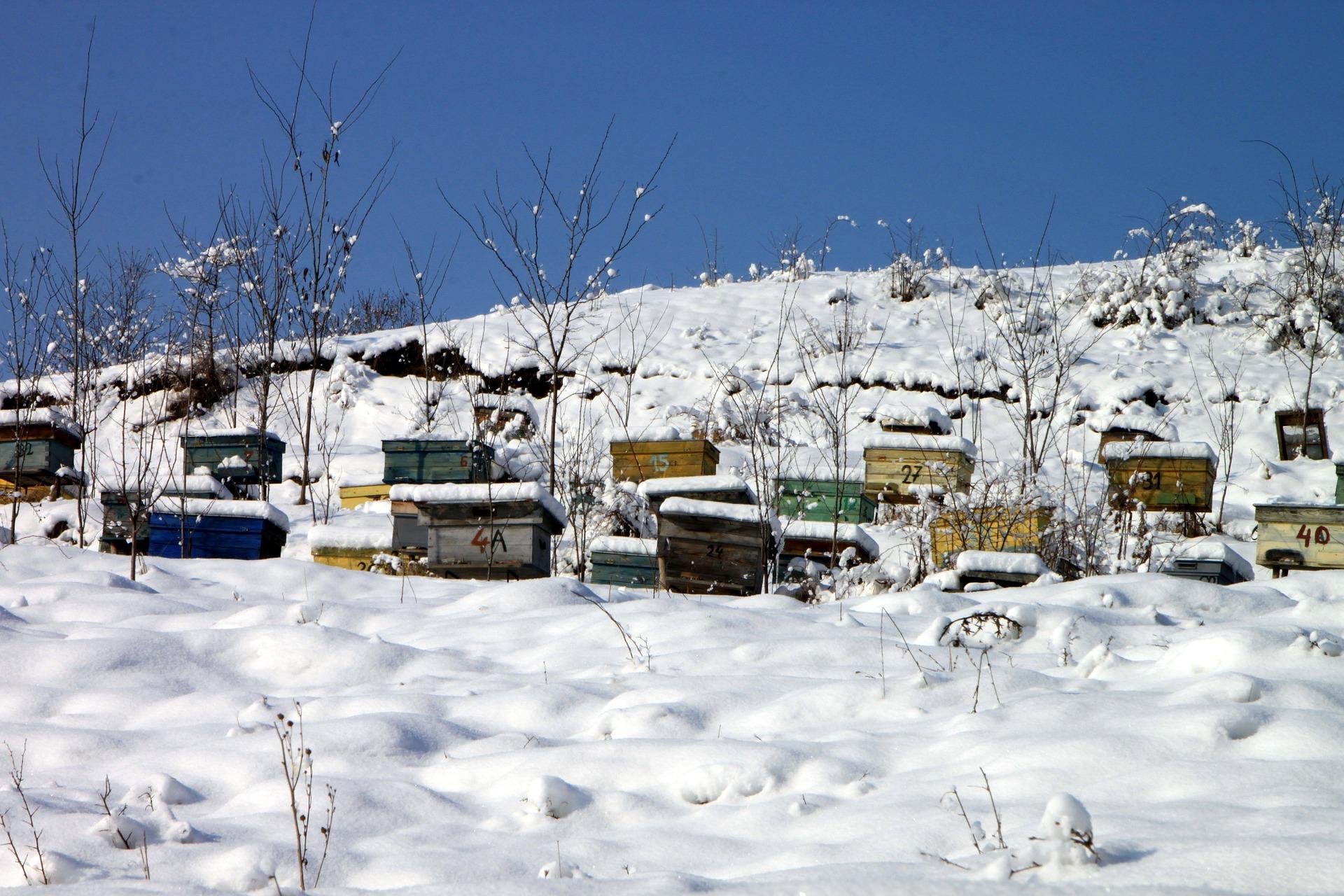 Machen Bienen eigentlich Winterschlaf?