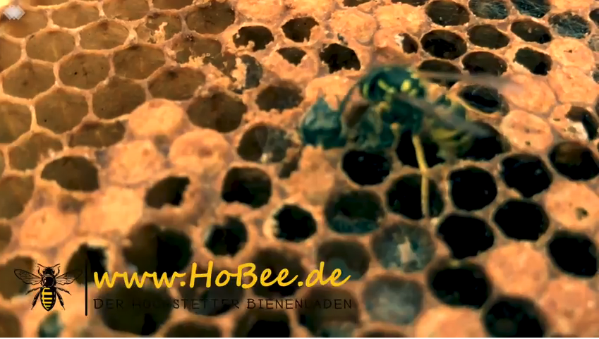 Wespen und Bienen